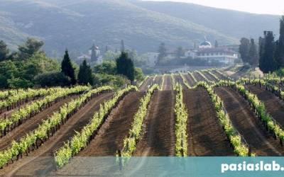 Η έννοια του terroir για κρασί και ελαιόλαδο