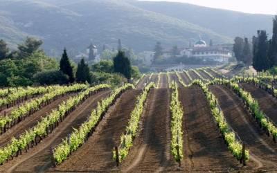 Υποχρεωτική η ανάλυση εδάφους για την εγκατάσταση αμπελώνα
