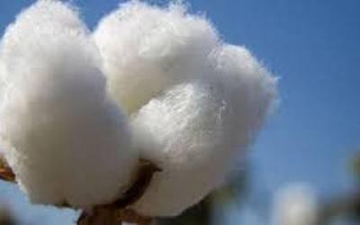 Τροφοπενίες στην καλλιέργεια βαμβακιού-Απαραίτητη η φυλλοδιαγνωστική αυτή την περίοδο